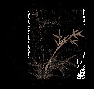 разработка сайтов в могилеве